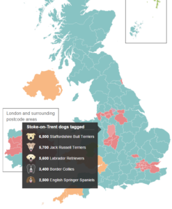 Most-popular-breeds-of-dog-stoke-on-trent