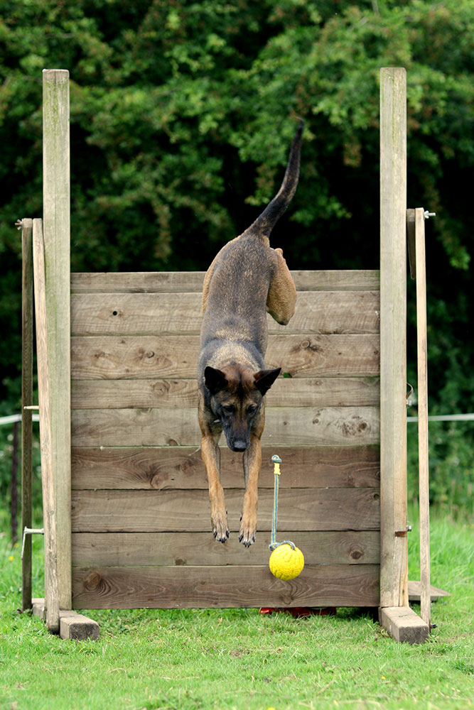 dina-jumping-with-ball